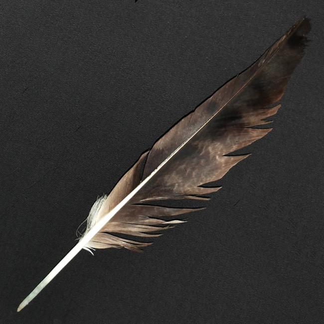 древние птичье перо показать фото номера категории